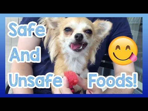 Foods dogs can and can't eat! safe and unsafe foods for dogs to eat or avoid!