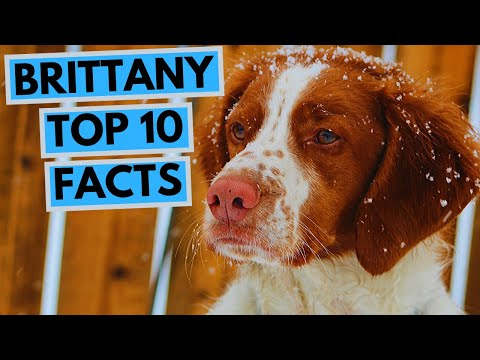 Brittany - top 10 interesting facts