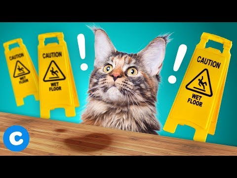 3 ways to get rid of pet urine from hardwood floors | chewy