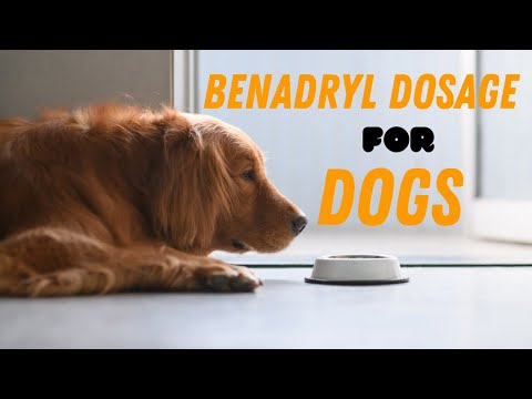 Benadryl dosage for dogs guide