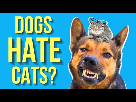 Why do dogs hate cats? ( are they natural enemies? )
