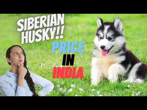 Husky price in india | how much price of husky dog in india | husky dog price in india rupees