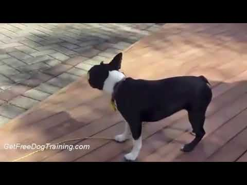 Doggy dan's online dog trainer - how to get your dog to stop barking