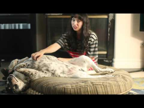"""""""why do dogs"""" episode 4 - why dogs love belly rubs"""