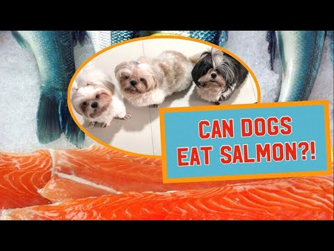 Can dogs eat salmon?   homemade food for dogs   healthy food tips