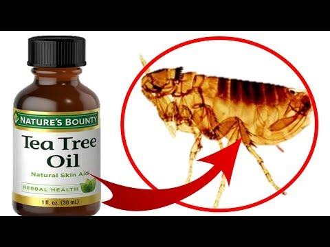 How to use tea tree oil to treat fleas on cats & dogs