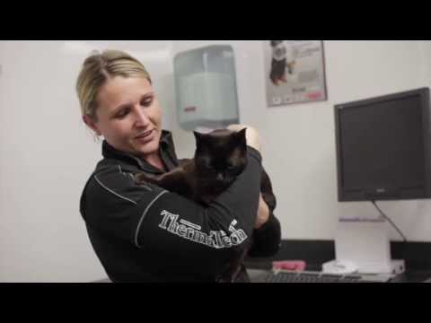 Worming dogs and cats - how often to worm, and how to win the worm war