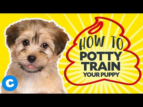 How to potty train a puppy   chewy