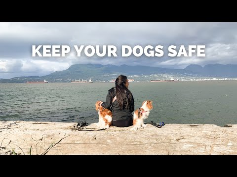 Keep your dogs safe! muzzle up! // dog health