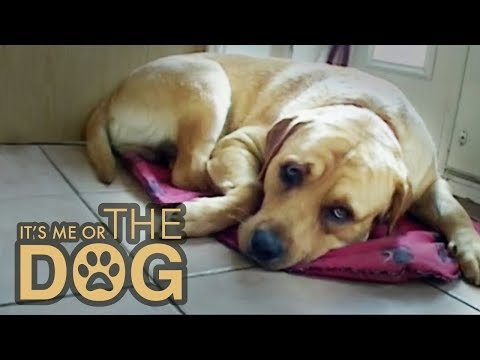 How to stop your dog peeing in the house | it's me or the dog