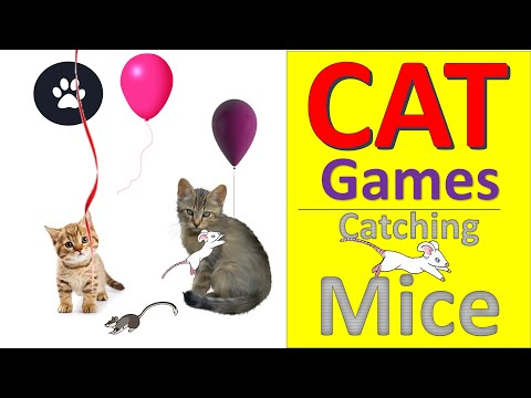 Cat game - catching mice! cool entertainment video for my cats to watch.