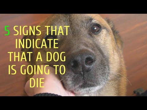 5 signs that indicate that a dog is going to die