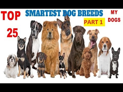 Top 25 smartest dog breeds in the world (part1)#newest