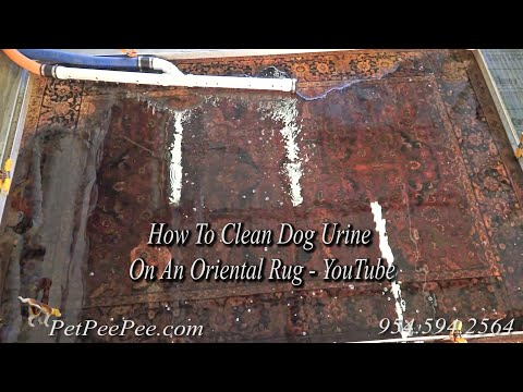 How to clean dog urine on an oriental rug - youtube   petpeepee