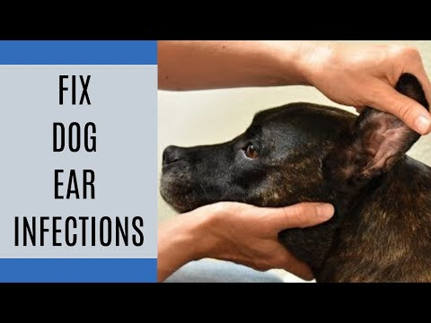 How to fix dog ear infections