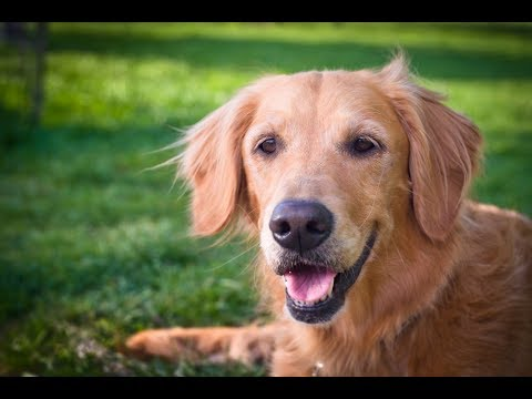 Probiotics for dogs - why dogs need probiotic supplements