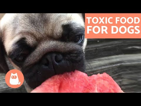 Food dogs can't eat - toxic and forbidden food
