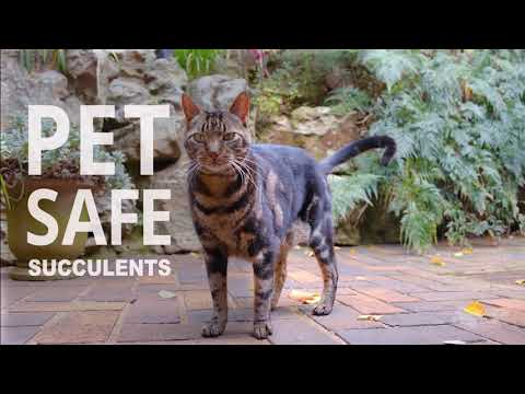 Which succulents are safe for pets?