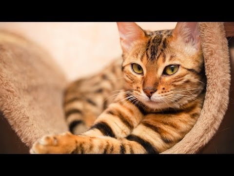 What vaccinations does a cat need? | cat care