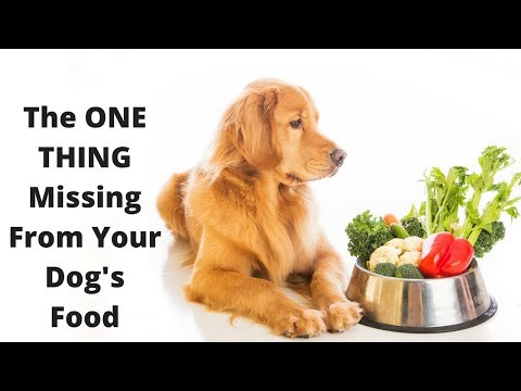 Improve your dog's skin, coat, and health with this one simple thing!