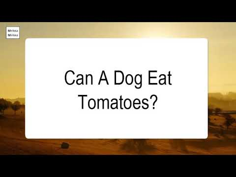 Can a dog eat tomatoes