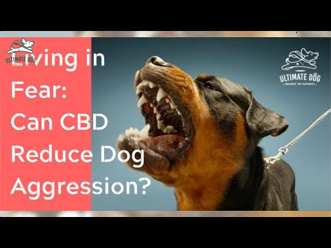 Does cbd for dogs with aggression help? the why & the how addressed