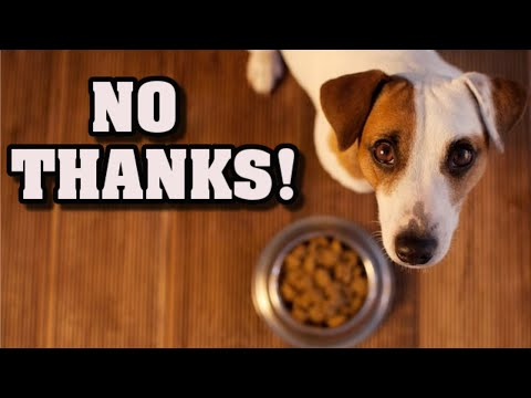 Why my dog won't eat its food- why is that and how can i help my dog?