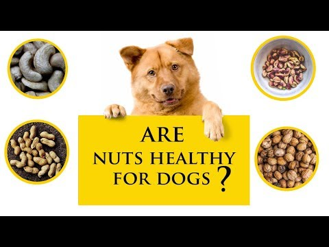 Can dogs eat nuts | is it safe?