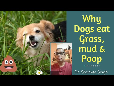 Why dogs eat grass & poop ?