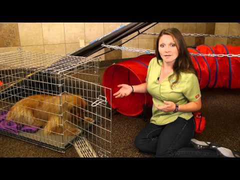 How to keep a dog from defecating in its crate : dog training