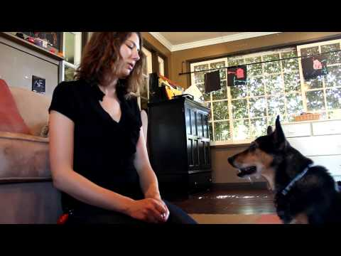 How to teach your dog to calm down