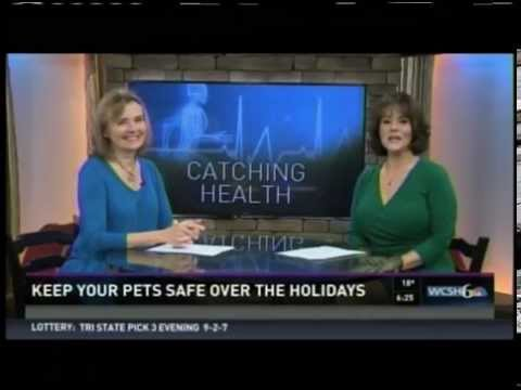Don't feed your dog your dog turkey leftovers and other pet safety tips
