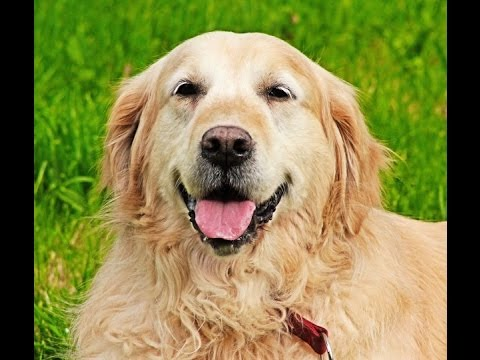 Will neutering your dog help eliminate aggression issues?