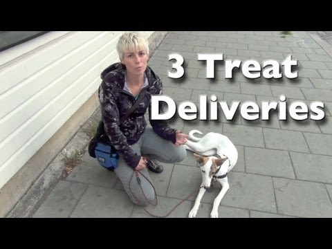 Shy and reactive dog training- 3 calm treat deliveries