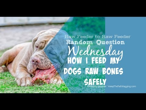 Rqw: which raw bones are safe for dogs?
