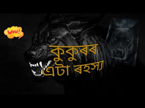 #reasons why some dogs howl, #why dogs cry at night? - amazing facts, কুকুৰে ৰাতি কিয় ভুকে?