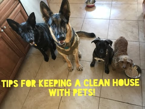 Tips for keeping a clean house with pets!