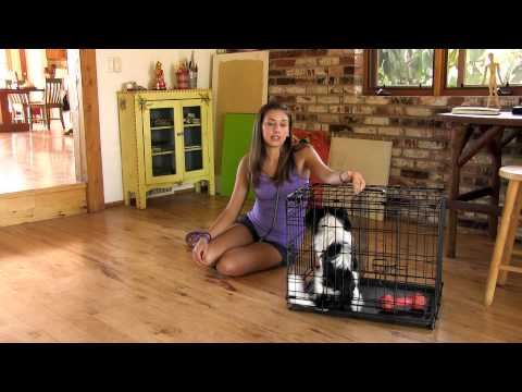 How to potty train your dog in 7 days   super awesome dogs