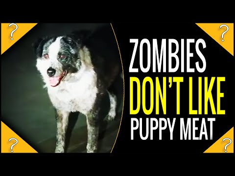 Why didn't the zombies eat the dog in dawn of the dead