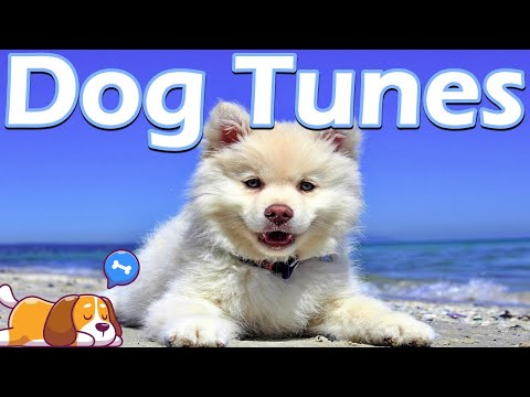 How to calm down a dog with anxiety - dog music | relaxing music for dogs with anxiety