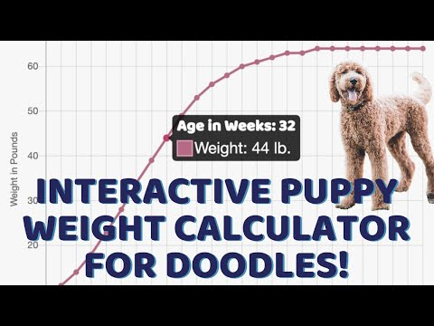 Interactive puppy weight calculator for doodles! demo & quick adult weight formulas