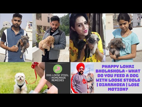 Happy lohri friend's - what do you feed a dog with loose stools | diarrhoea | lose motion?