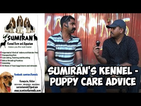 Sumiran's kennel :how to care puppy: food and suppliments : puppy caring : german shepherd:deworming