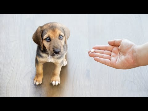 What to give my dog for pain?