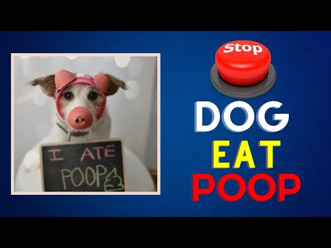 Why dogs eat poop and how to stop it best practices || dogbia