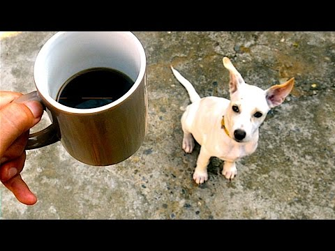4 foods that are surprisingly dangerous for dogs