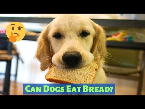 Can dogs eat bread? should you feed bread to your dog?