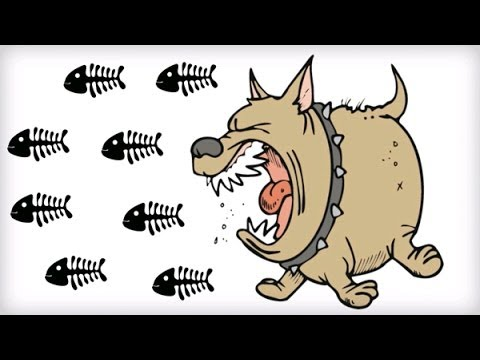 What are the side effects of fish oil for dogs?
