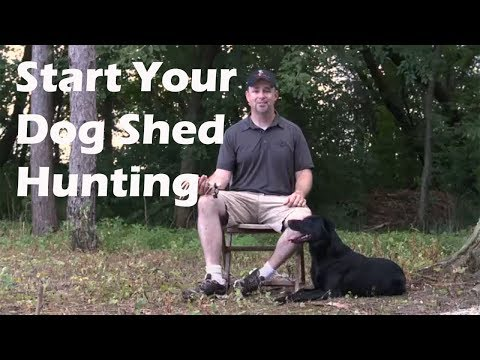 Train your dog to shed hunt!!