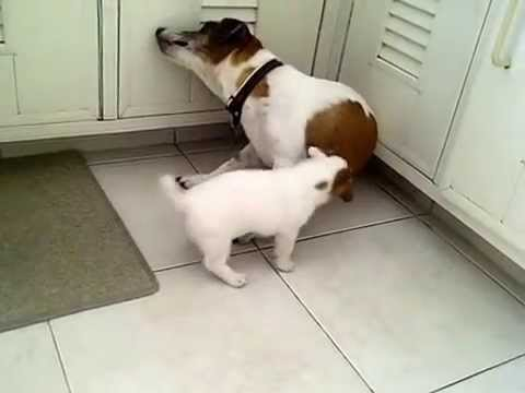 Momma won't feed her puppy (funny)